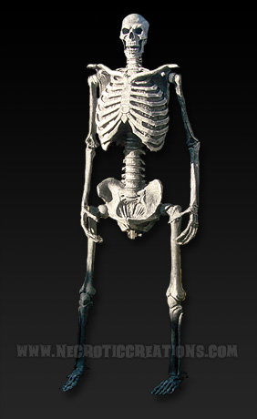 Slim Skeleton